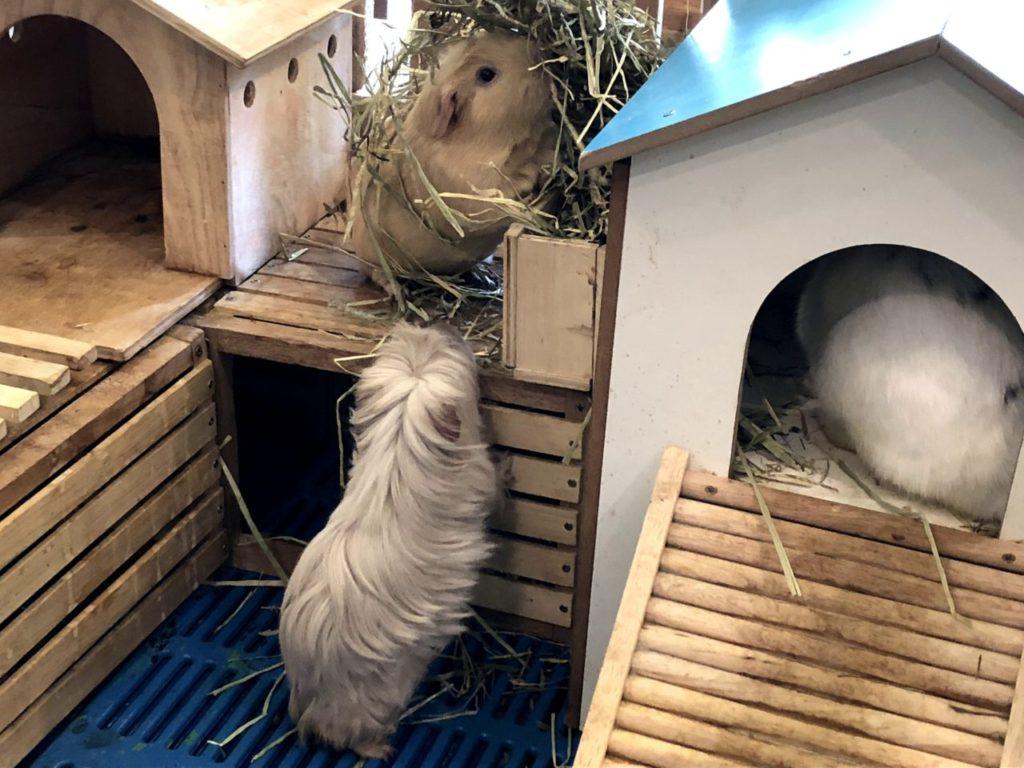 rabbit cafe